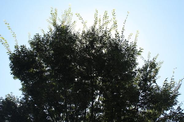 so-12330001.jpg